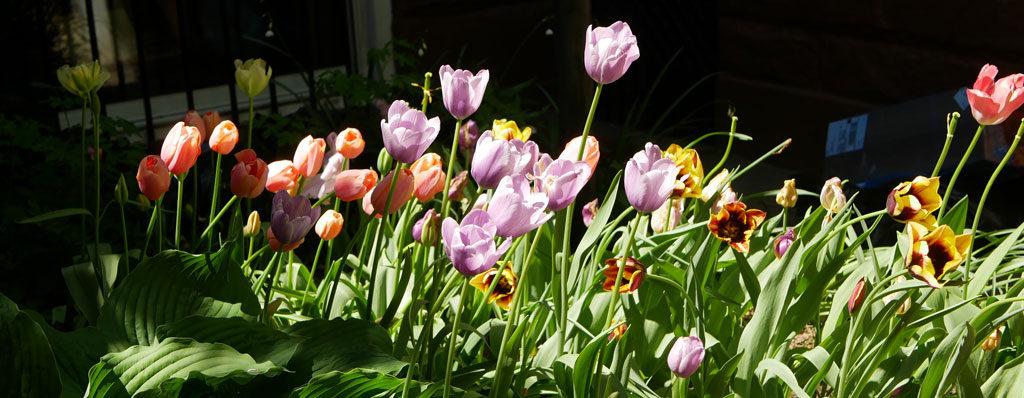 פרחים בברוקלין